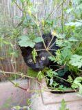 Baby wild cat